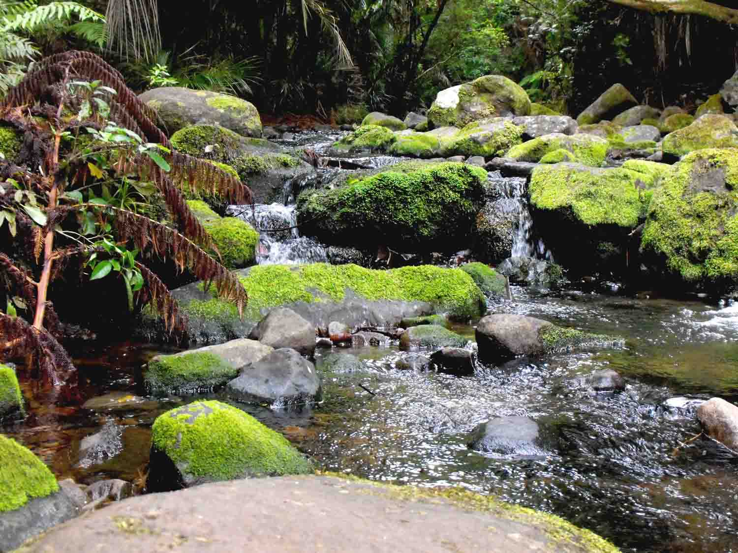 stream in the Waitakere Ranges