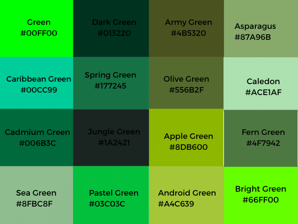 Different Shades Of Green Color