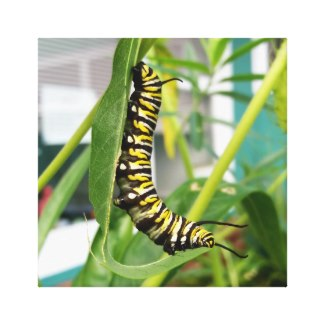 monarch butterfly caterpillar canvas print